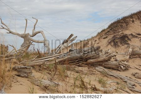 A ghost forest on the sleeping bear of Sleeping Bear Dunes National Lakeshore, Michigan