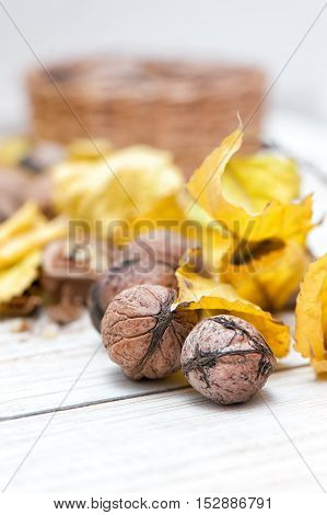 Organic walnuts with yellow leaves on white background.
