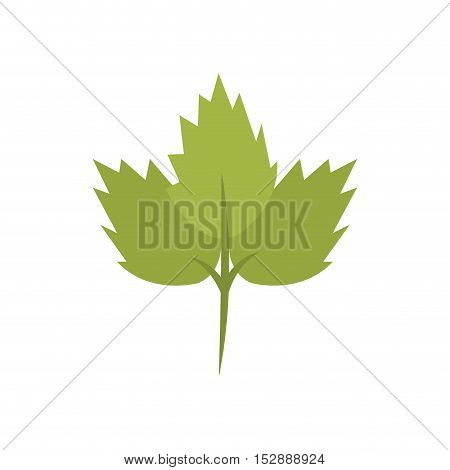 silhouette color with coriander leaf vector illustration