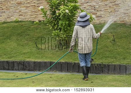 worker watering the tree yard in the morning - can use to display or montage on product