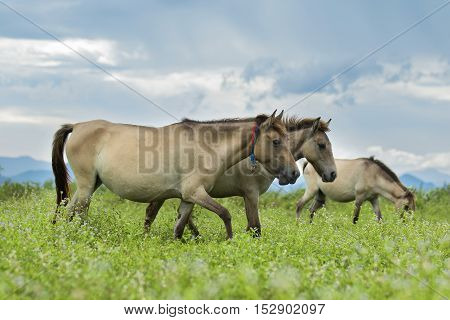 Hose, horse in the pasture, close up
