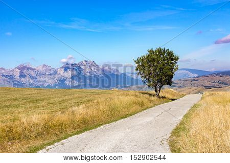 Lonely Small Tree In A Yellow Field Next To A Narrow Road On The Background Of High Mountains And Bl