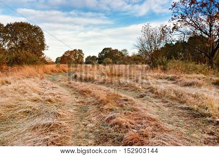 First Autumn Frosts. Road In The Meadow