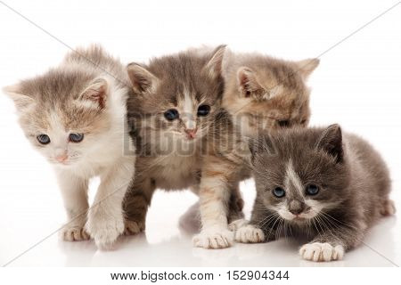 Little 1 month old kittens on white background