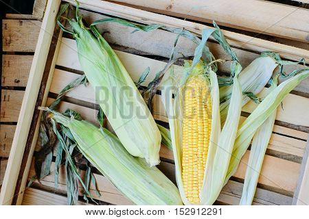 top view of cob corn in box on natural wooden background