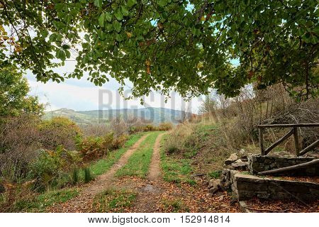 dirt road goes under the branches of a beech in Nebrodi Park, Sicily