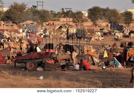 Naguar Rajasthan India- Febuary 10 2011: Farmers families and cattles at Naguar Cattle Fair at Naguar Rajasthan India. Nagaur Cattle Fair (also known as Ramdeoji Cattle Fair) is held every year in the month of Jan-Feb in Nagaur district of Rajasthan is th
