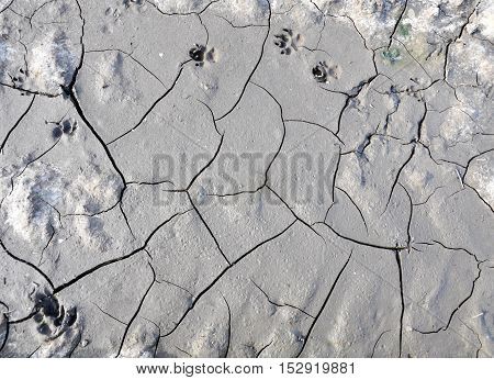 Texture of gray dry ground with cracks and dog tracks. Background.