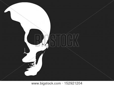 Halloween Skull Vector Illustration