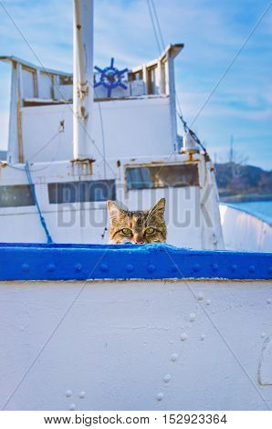 Cat On Board Of Small Fishing Boat