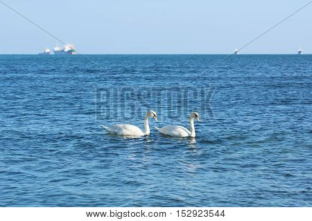 White Swans in front of the Ships in the Black Sea