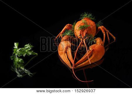 Red boiled crayfish with parsley and fennel on a black background with reflection