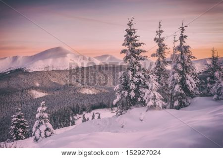 Fantastic orange evening landscape glowing by sunlight. Dramatic wintry scene with snowy trees. Kukul ridge, Carpathians, Ukraine, Europe. Merry Christmas! Toned like Instagram filter