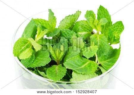 Fresh peppermint leaves in glass bowl over white. Green Mentha piperita is an edible herb and its mint flavor is used for ice cream, cocktails and toothpaste. Isolated macro food photo.