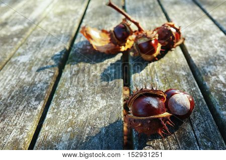 Fresh chestnuts on wooden background sunny autumn day