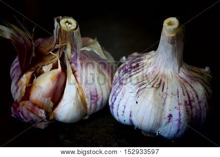 Whole garlics in the black background one half opened and a clove on the front