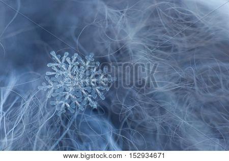 Snowflakes On Fur