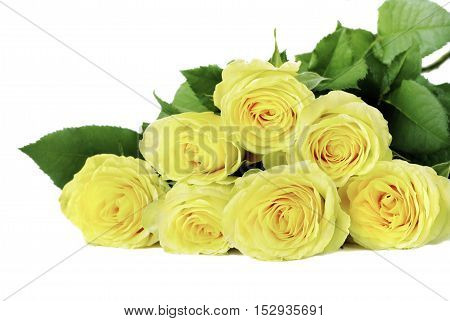 Bouquet of yellow roses on a white background