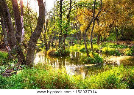 Beautiful warm autumn landscape lake,swamp, pond,wonderful background
