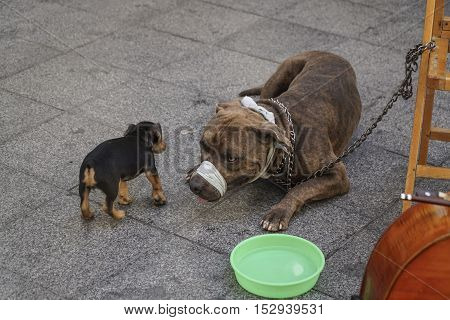 a dog and cute puppy at street