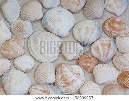 texture of white sea shells in a different designs