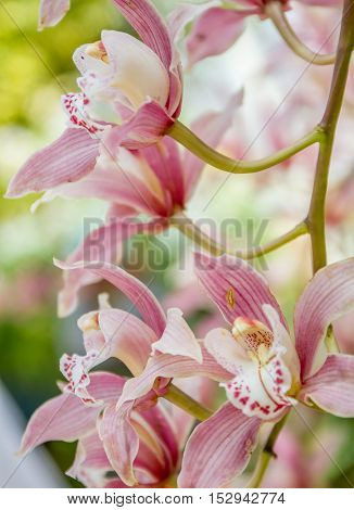 Beautiful orchid flowers on natural background