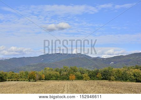 An autumnal field in late October in the north east Italian region of Friuli Venezia Giulia. A havested cornfield can be seen in the foreground and the first snows of the season can be seen on the Italian Alps in the far background.