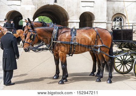 London, the UK - May 2016: Coachman and horses in Whitehall Yard