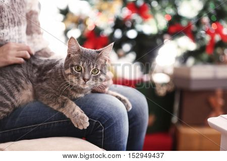 Woman sitting on sofa with grey tabby cat on her knees, close up view