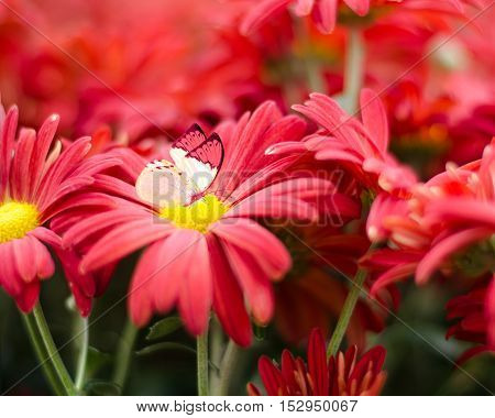 lovely red flowers as background and butterfly