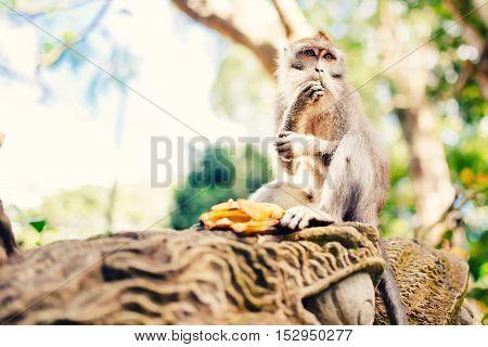Jungle Details, Portrait Of Monkey In Tropical Rainforest