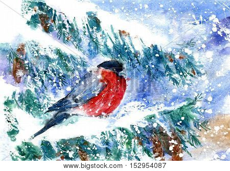 Bullfinch on the branch of spruce.Greeting card with snowflakes and bird.Winter postcard.Watercolor hand drawn illustration.