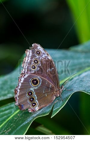 Tropical Butterfly On A Leaf