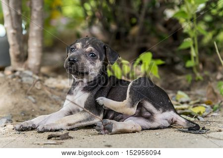 street young dog / puppy live alone abandoned so sad feel