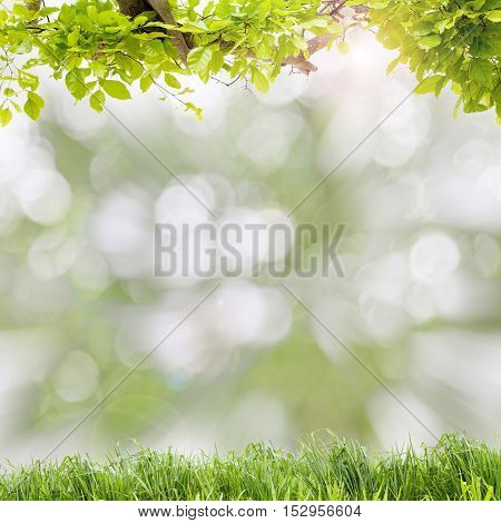 Beautiful green leaves frame with green grass on scenery nature blur background.