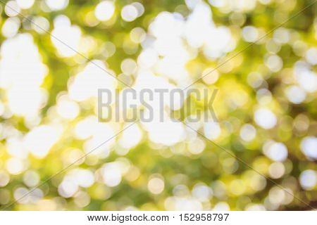 Beautiful nature green bokeh background - Abstract blur natural