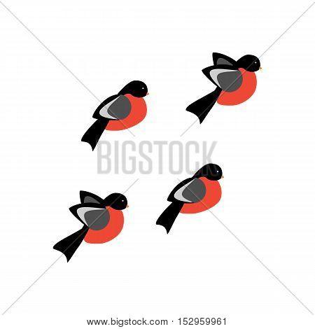 Bullfinch bird illustration on the white background. Vector illustration