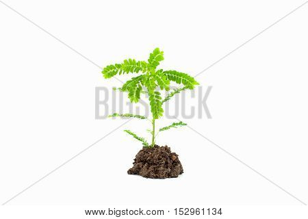 Small young green plant on white background Depending on the soil pile