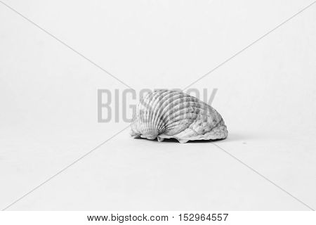 One seashell with shadow on a white background.