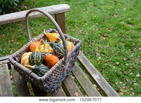 Rustic Basket Filled With A Selection Of Ornamental Gourds