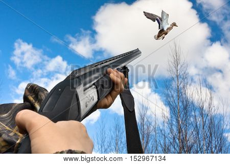 hands of hunter shooting from shotgun to flying duck