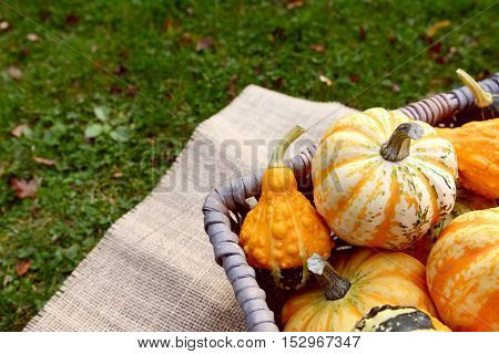 Boldly Coloured And Patterned Gourds In A Basket