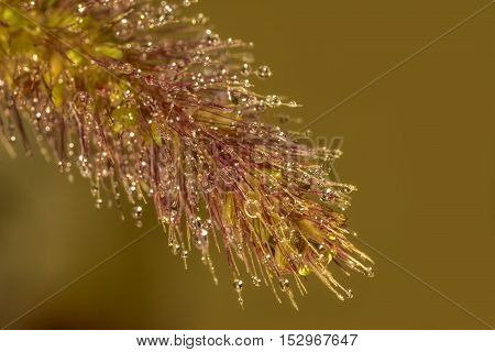 Exciting macro of dew drops on blade of grass