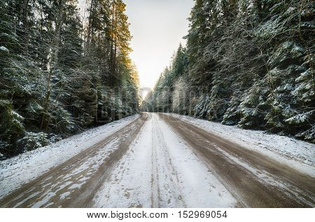 Country road in coniferous forest covered with snow. It's a nasty day.