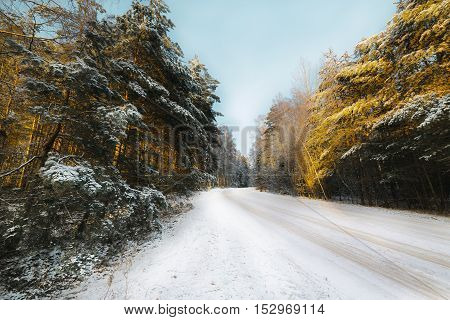 Country road in coniferous forest covered with snow. Sunlight.
