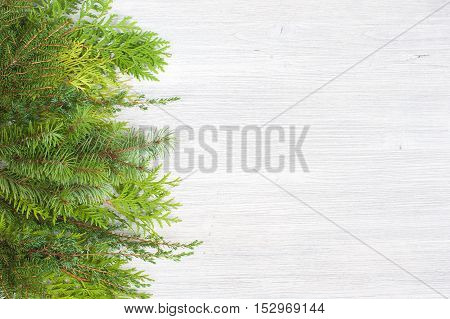 White aged wooden background with evergreen branches