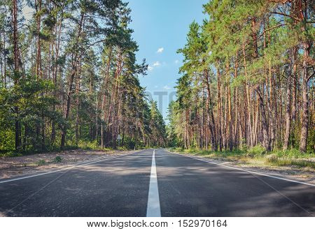 Open Road in future no cars auto on asphalt road through green forest trees pines spruces.