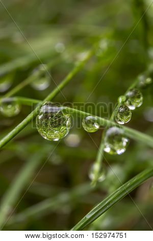 the art composition of water drops in green grass