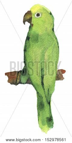 watercolor sketch of lovebird parrot on white background