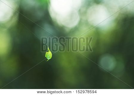 Leaf which has hung on a web. Small leaf on a web. Green leaf. Nature Blurred Background. Green Bokeh. Summer or spring backdrop with fresh green leaves and sun flares